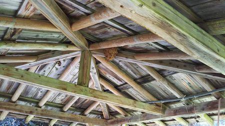 ハンモックとスズメバチの巣2.jpg